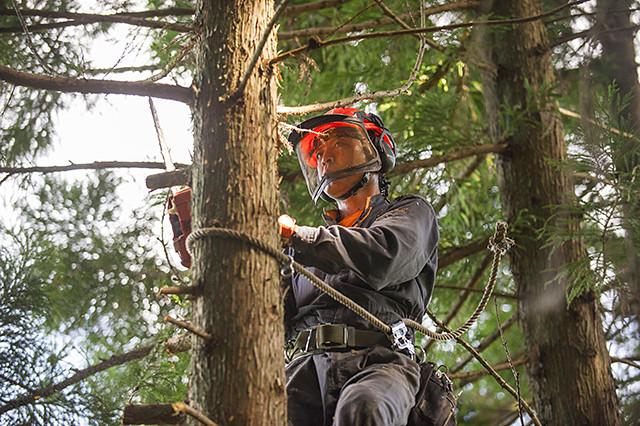 下枝を切り取る作業