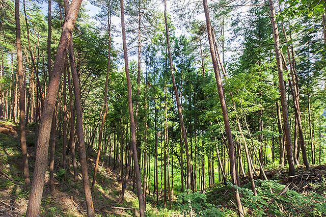 豊かな森を守るために